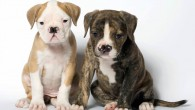 Two double-nosed puppies taken to Battersea Dogs and Cats Home, London, Britain - 26 Jun 2006